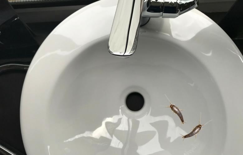 so sorgst du daf r dass silberfische in zukunft nicht mehr zu dir ins haus kommen. Black Bedroom Furniture Sets. Home Design Ideas